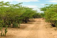 Desert dirt road Stock Photos