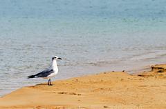 Bird on a beach Stock Photos