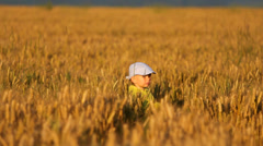 Little agriculturist look and walk on cereals culture field, warm natural light Stock Footage