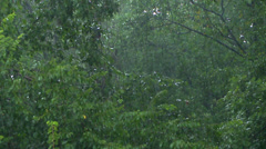 Rain Gusting through Trees during Downpour Stock Footage