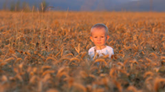 Gorgeous scenery, lovely baby boy hide in grain culture at sunset - stock footage