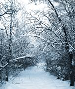 Snow-covered path in winter forest Stock Photos