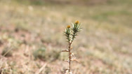 Stock Video Footage of Single flower plant on arid ground, move in wind breeze