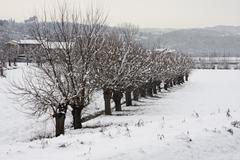 Row of trees mulberries on the river embankment in winter after copious snowf Stock Photos