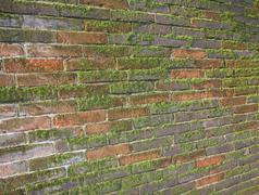 Old wet brick wall exposed to the north with a lot of green moss Stock Photos