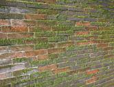 Stock Photo of old wet brick wall exposed to the north with a lot of green moss