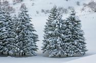 Stock Photo of fields of snow and snow covered trees on the italian dolomites