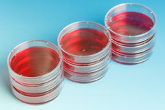 Stack of petri dishes Stock Photos