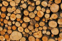 Woodshed with logs cut and perfectly aligned for heating during winter Stock Photos
