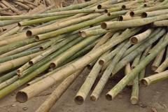 Bamboo for construction. Stock Photos