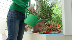 woman watering cactus plants with watering-can in greenhouse - stock footage