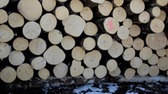 607 freshly cut logs neatly piled Stock Footage