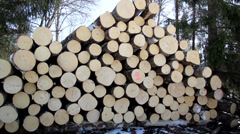 freshly cut logs and trees at the background - stock footage