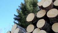 611 view of the cut logs that are piled at the top Stock Footage