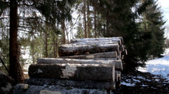 627 piled logs on the ground are slowly increasing Stock Footage