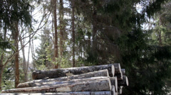 629 big logs are added in the pile Stock Footage