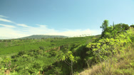 Stock Video Footage of Costa Rica Coffee Plantation Pan