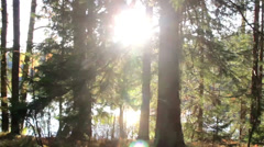 Sun rays getting inside the forest despite the tall trees Stock Footage