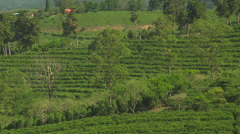 Coffee Plantation - diff. angle Stock Footage