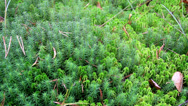 Stock Video Footage of 716 overhead view of the green shrubs bog swamp