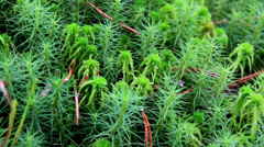 715 green shrubs all healthy and looking fresh bog swamp Stock Footage