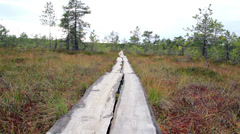 728 trail within the forest on bog swamp Stock Footage