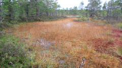 Large area occupied by bog swamp marsh land Stock Footage