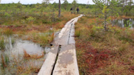 Stock Video Footage of 735 wooden trail in bog swamp marsh land