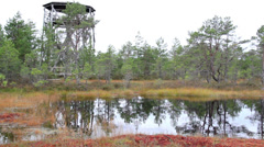 Tree house found near the bog swamp marsh land Stock Footage