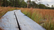 Stock Video Footage of 746 trail in the bog swamp marsh land is made of wood