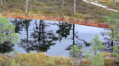 Water reflection of the trees found on the bog swamp marsh land Stock Footage