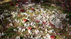 Mushrooms growing on the ground Stock Footage