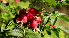 811 closer image of the pomegranate Stock Footage