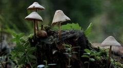 Growing mushroom on tree trunk Stock Footage