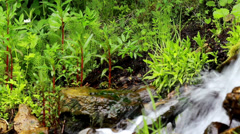 871 water flowing and some shrubs in the nearby area Stock Footage
