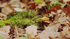 One chanterelle in the forest Stock Footage