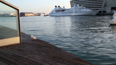 Seagull standing at the port Stock Footage