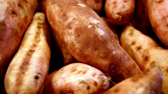 Sweet potatoes all in line Stock Footage