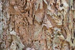 Bark textured background - stock photo
