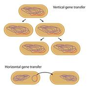 Vertical versus horizontal gene transfer in bacteria Stock Illustration