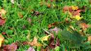 Leaves on the ground Stock Footage