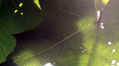 Image of leaves with sunlight Stock Footage