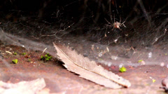Withered leaf and spider Stock Footage