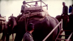 8mm old film elephants on a tour at Tiger Tops Lodge Stock Footage
