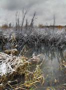 November landscape - stock photo