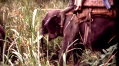 8mm old film People Riding a elephants on a tour at Tiger Tops Lodge clip 3 Stock Footage