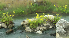 Hot spring creek with flowers, 2 Stock Footage