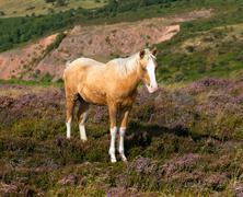 Pony blonde hair and fringe Stock Photos