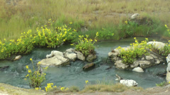 Hot spring creek with flowers, 5 Stock Footage