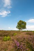 heather landscape - stock photo